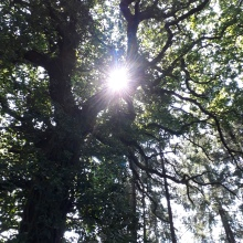 Sunlight through the canopy